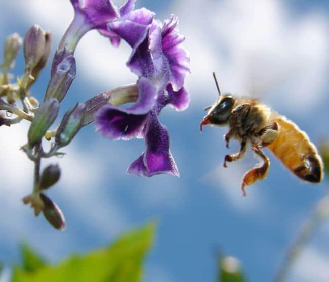 Serangga seperti lebah memiliki kerangka luar atau eksoskeleton yang tersusun atas kirin (chitin)