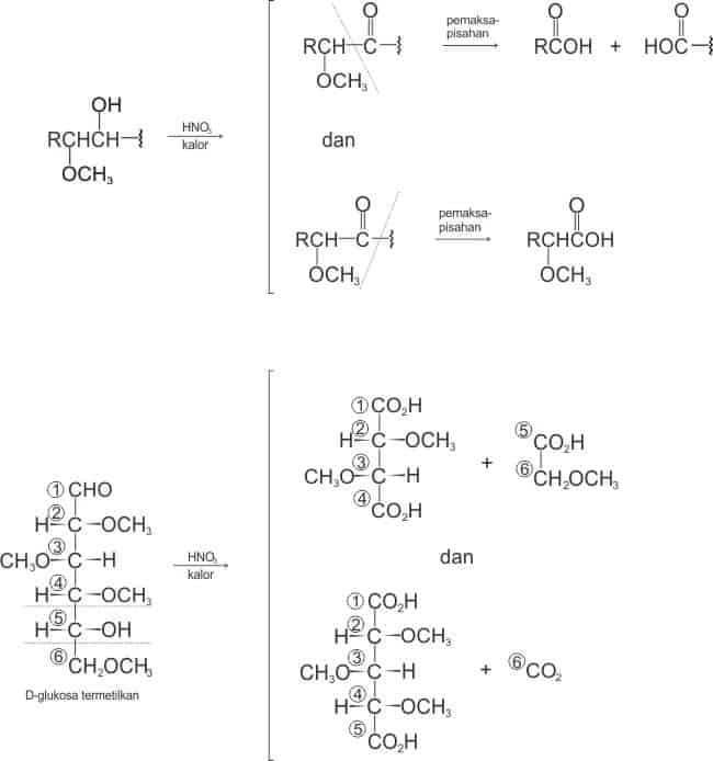 Oksidasi pemaksapisahan D-glukosa termetilasi