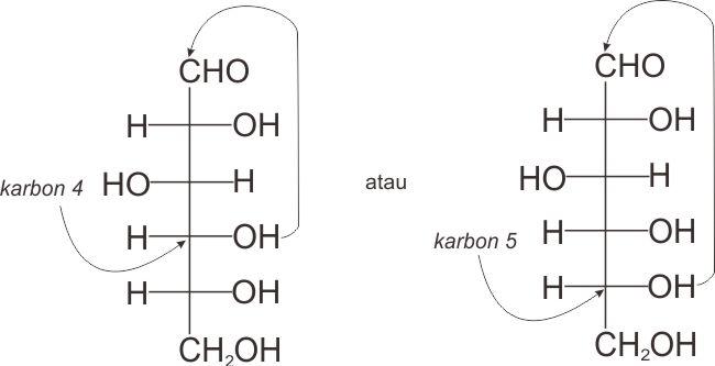 Pembentukan hemiasetal intramolekul glukosa pada karbon 4 atau karbon 5