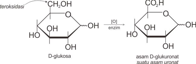 Reaksi pembentukan asam uronat
