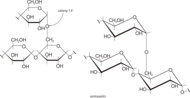 Struktur molekul amilopektin