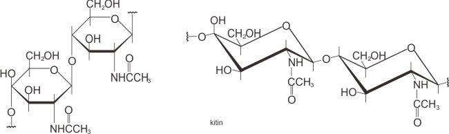 Struktur molekul kitin (chitin)