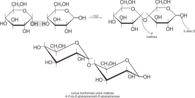 Struktur dan reaksi pembentukan α-maltosa