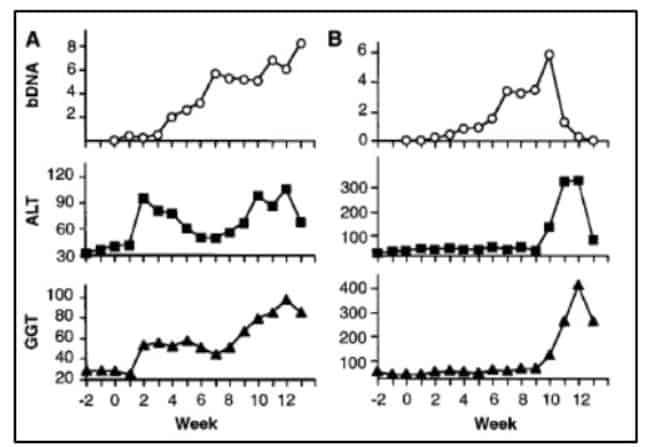 Pengukuran enzim hati dan viremia dua simpanse yang diinokulasi konsensus sekuens HCV RNA